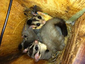 Nesting box image 1